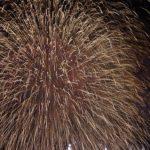花火大会2016年|関東の花火大会で大玉があがる大会は?