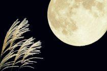 十五夜のお月見