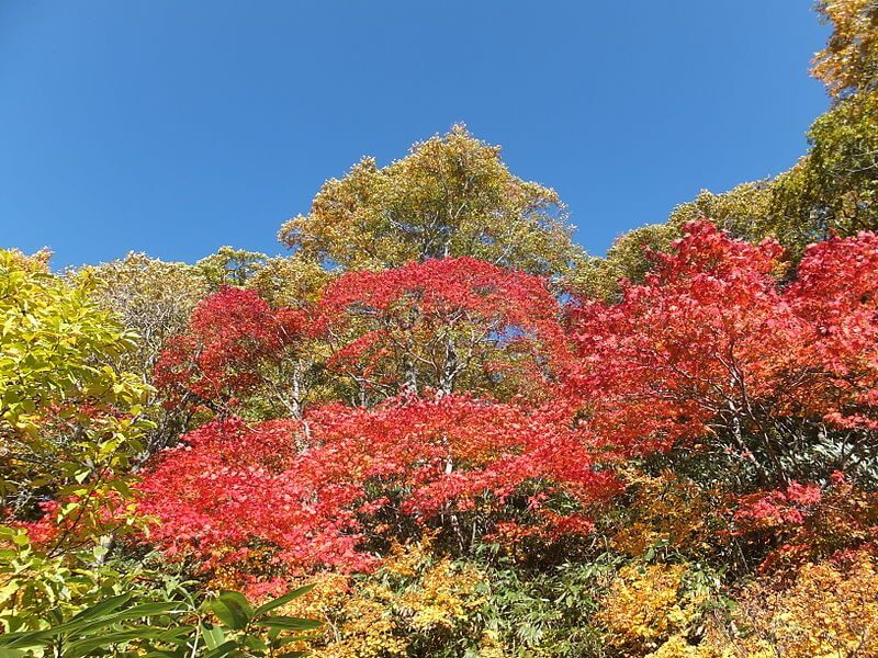 八幡平の紅葉
