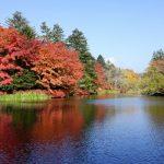 軽井沢の紅葉、混雑を避けるなら、北軽井沢の紅葉樹海がおすすめ穴場