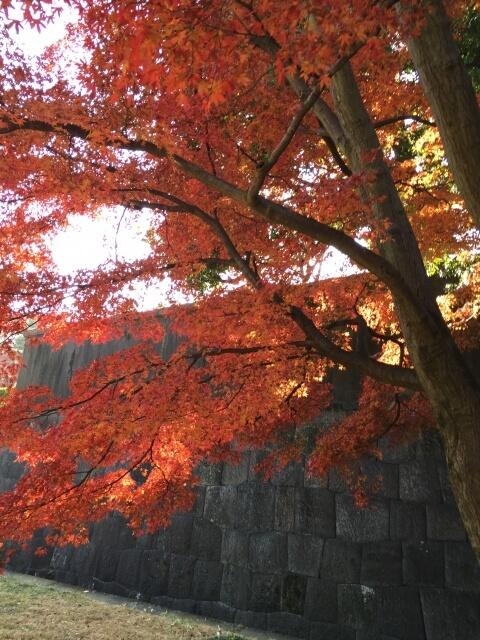 皇居の紅葉(乾通り通り抜け)