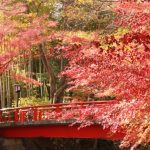 修善寺の紅葉の時期と見どころは?紅葉狩りと日帰り温泉で癒される〜