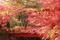 修善寺の紅葉