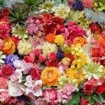 切り花(生花)の種類と名前。これだけは知っておきたい32品種の花