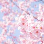 お花見の駅から歩いて行ける名所(首都圏)と、桜の基礎知識。