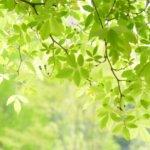 新緑の時期と名所(関東)。新緑の色や香りをたっぷりと楽しむには?