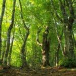 山の木の名前と種類の覚え方。シイ、カシ、ブナ、ナラなど広葉樹編