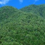 スギやヒノキの人工林を広葉樹林に戻すのは、どこまで進んでいるか?