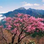 野生種ツツジの種類や時期や名所。山歩きで出会えるツツジの楽しみ方