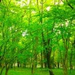雑木林(ぞうきばやし)と里山との関係は? 樹種や成り立ちを知る。