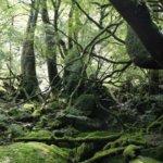 日本の原生林と原生林的な自然林の一覧。森林の種類と基礎知識も。