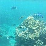 サンゴのシュノーケル、本州・四国・九州の近場ポイントが案外よい?