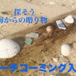 ビーチコーミングとは? 貝殻やシーグラスを集めるコツとお宝リスト