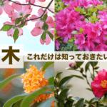 花木(かぼく)の種類と名前。開花時期や香りと特徴・86種一覧