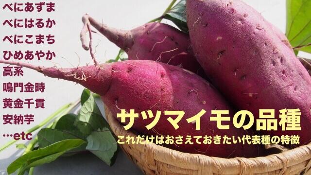 サツマイモの品種