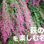 萩の花の名所14ヵ所と、秋を代表する花木、萩(ハギ)の基礎知識