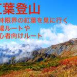 紅葉登山の穴場と初心者向けルート。高い山の森林限界の紅葉が秀逸!
