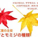 カエデとモミジの違いと種類。日本の紅葉の主役カエデ類の基礎知識。