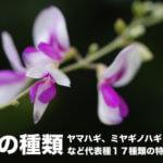萩の花の種類。ヤマハギ、ミヤギノハギ、ニシキハギなど17種の特徴