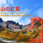 ナナカマドとダケカンバの紅葉。高い山・森林限界で紅葉する樹木は?