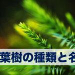 針葉樹の名前と種類。これだけは知っておきたい日本の針葉樹の代表種